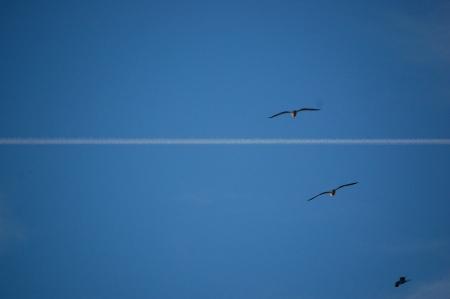 Gabbiani nel cielo di Camogli