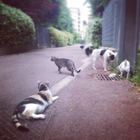 il mio piccolo branco di cani e gatti